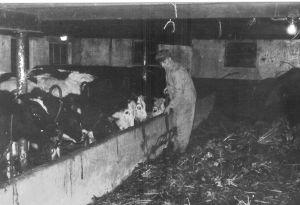 Miel In De Koestal 1972corr2