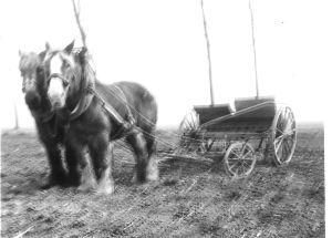 Zaaien Met Paarden