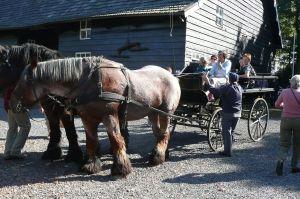 Aankomst Paarden Met Rijtuig