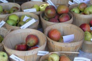 Appels Van De SLZ